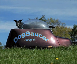 Dog Saucer: Dogs of the Future Riding Motorcycles