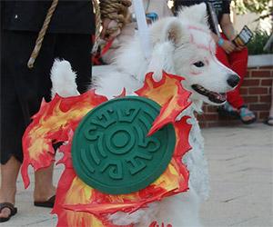 Okami Cosplay: Dog Dressed as Amaterasu