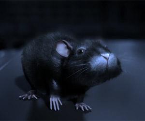 One Rat Short: Lovely CGI Animated Story