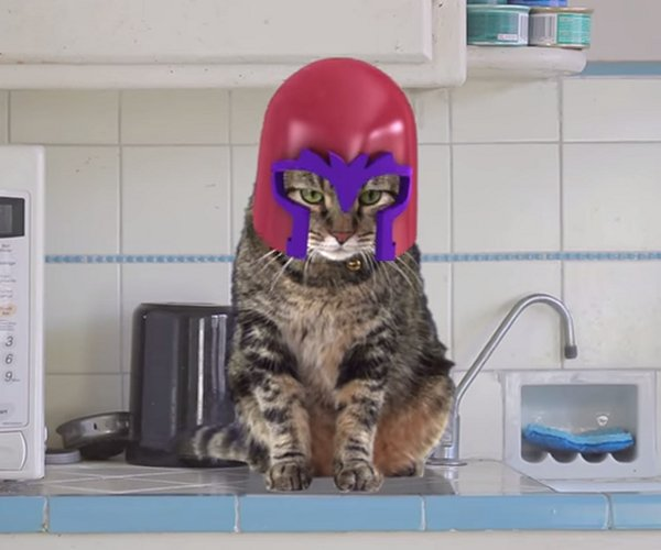 Magneto Cat is a Bad Kitty