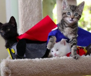 Avengers: Age of Ultron (with Kittens)
