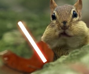 Jedi Chipmunks Have a Lightsaber Battle