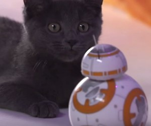 Cats Test the BB-8 Sphero Robot