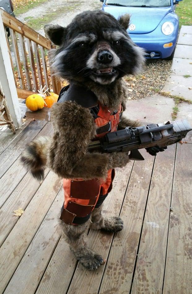 rocket_raccoon_costume_by_christina_borchardt_1