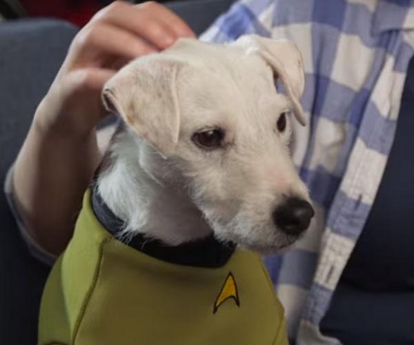 Star Trek: Into Barkness