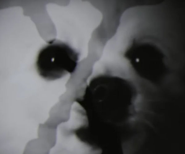 The X-Files Has Gone to the Dogs